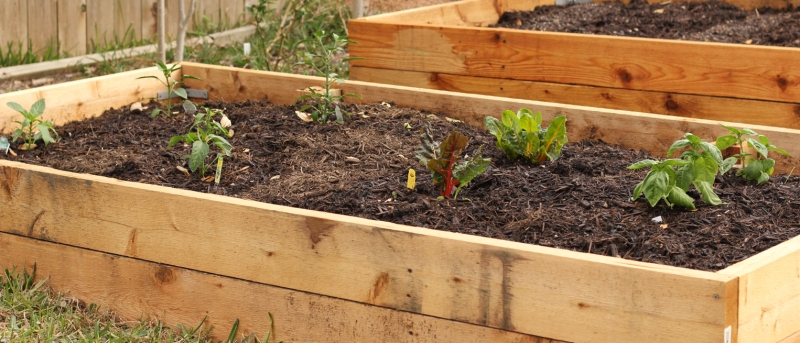 The second bed has two basil plants, two chard plants, and five pepper plants, all of different varieties.