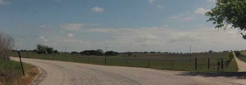 Can you see the bluebonnets in the field?